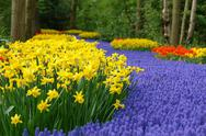 Stock Photo of Spring flower bed in Keukenhof
