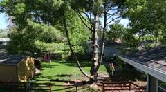 Tree winch long shot Stock Footage