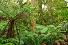 Rain forest, Victoria, Australia Stock Photos