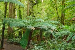 rain forest, Victoria, Australia - stock photo