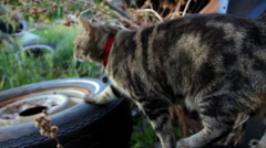 Farm Cat with old farm junk Stock Footage