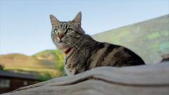 Farm Cat on Fence Stock Footage