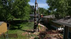 Tree trunk cut Stock Footage