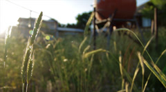Panning shot of wheat on a farm Stock Footage