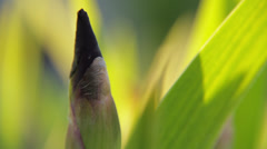 Flower Bud Stock Footage