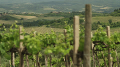 Vines in winery with fields in background / Tuscany,Italy Stock Footage