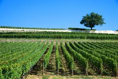 Vineyards of saint emilion, bordeaux vineyards Stock Photos