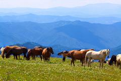 Landscape with  herd of horses Stock Photos