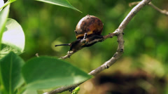 Snail with antennas on the branch on breeze Stock Footage