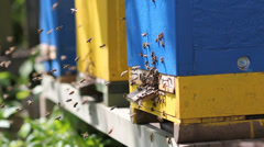 apiary, swarm of bees at the entrance to the hive. - stock footage