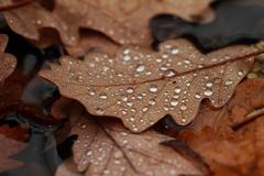 Fallen leaves covered with raindrops Stock Photos