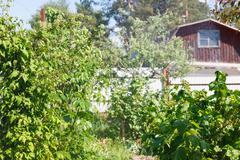 Stock Photo of green vegetation