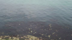 Calm and clear seawater at seaside Stock Footage