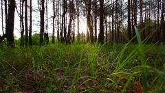 Morning in the forest. the sun's rays pass through trees and green grass. Stock Footage