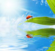 Ladybug sitting on a green leaf reflected in rendered water Stock Photos