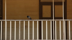 Bird on a Bannister of Asian Wooden House taking off Stock Footage