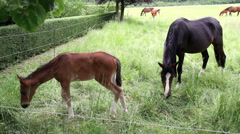 Horses on the meadow in sunny spring day. Stock Footage