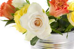 Multi-colored roses on a white background Stock Photos