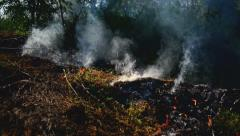Summer grass is burning in wildfire, natural disaster. - stock footage