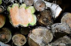 Closeup of some old rotting logs - stock photo