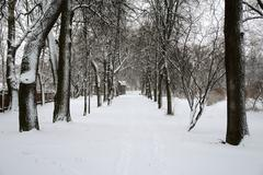 After snowstorm - stock photo
