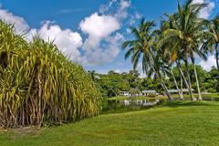 Tropical botanic garden - stock photo
