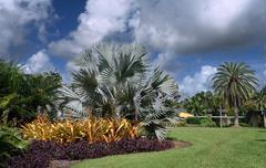Tropical botanic garden Stock Photos