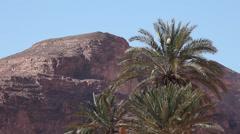 Palms in Ain Khudra Oasis, Sinai peninsula Stock Footage