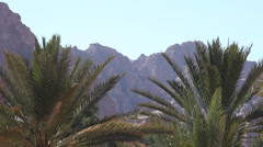 Palms in Ain Khudra Oasis, Sinai peninsula Stock Footage