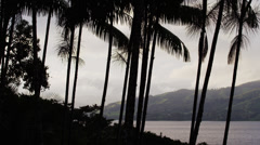 Costa Rica, Silhouettes of palm trees near Lake Arenal Stock Footage
