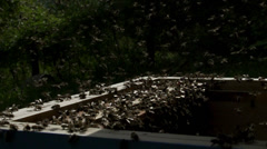 Swarm of bees hovering over a hive - stock footage