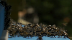Swarm of bees in beehive its are landing - stock footage