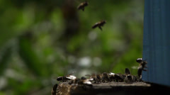 Swarm of bees flying around the hive Stock Footage