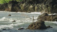 Costa Rica, Manuel Antonio State Park, Pelican on rock Stock Footage