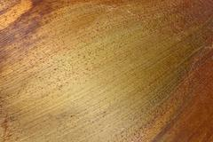 base of fallen palm frond reflecting color gradients - stock photo
