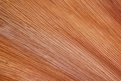 Stock Photo of brown striated patterns on base of fallen palm leaf