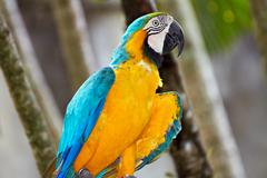 blue-and-gold macaw in nature surrounding - stock photo