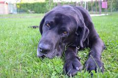 Pet dog on the grass Stock Photos