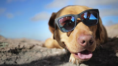 Cool dog - stock footage