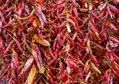 bundle of dried red hot pepper - stock photo
