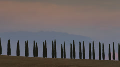Wide shot of trees in Italian countryside / Piensa, Tuscany, Italy Stock Footage