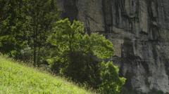 Medium shot of cliff and trees on hillside / Lauterbrunnan, Switzerland Stock Footage