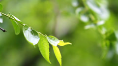 Tender branch close up Stock Footage