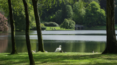 Medium shot of duck and swans near tranquil lake / Stourhead, England, United Stock Footage