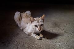 thin yellow cat - stock photo