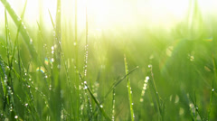Blurred grass background with water drops. Slo-mo. HD video footage 1080p Stock Footage