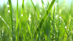 Blurred grass background with water drops. Slo-mo. HD video footage 1080p - stock footage