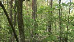A harvester cutting down a tree in a green forest Stock Footage