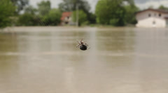 Spider moves and create cobweb in focus, river flooded house in the background. Stock Footage