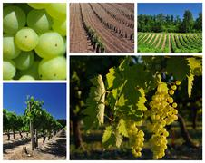 Collage about vineyard and wine industry Stock Photos